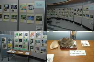 神奈川県の自然、生きものたちの写真展2009_1