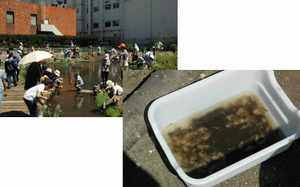 鶴見大学ビオトープ