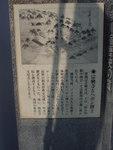 宣教師で医者でもあったヘボン博士が施療所を境内で開いた『宗興寺』