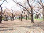 桜の名所でもある『権現山』