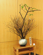 季節の花【2010.3.26】(鶴見大学会館1階ロビー) 河津桜、ミツマタ