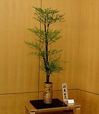 季節の花(H22.06.21)ナンテン