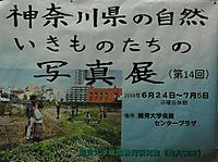 神奈川県の自然 いきものたちの写真展(第14回)